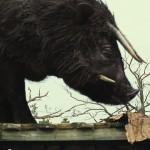 bestias-del-sur-salvaje-imagen-20